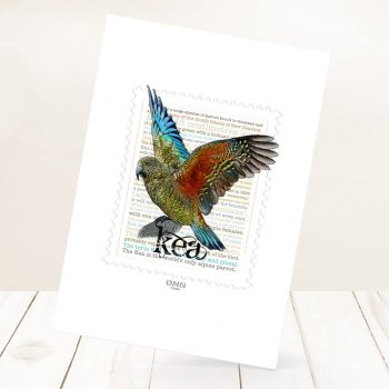 Kea print on card.