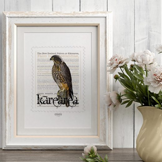 Kārearea print display in frame