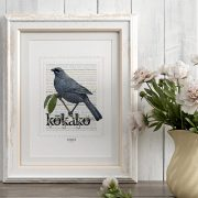 Kokako print on card. print display in frame